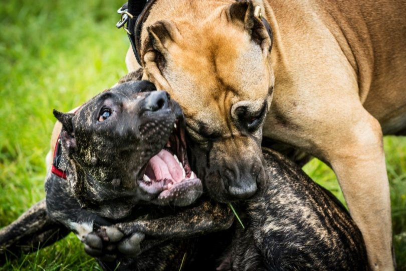 Help I've Been Bitten by My Neighbor's Dog
