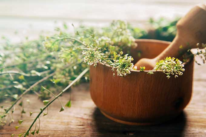 Foodals Guide to Choosing the Best Mortar and Pestle