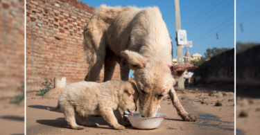 5 Ways to Help Street Dogs in your Area
