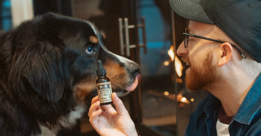 The Effectiveness Of CBD Oil For Pets