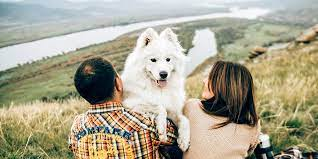 Ultimate packing list while travelling with your dog