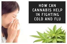 HOW CAN CBD HELP DURING COLD AND FLU SEASON?
