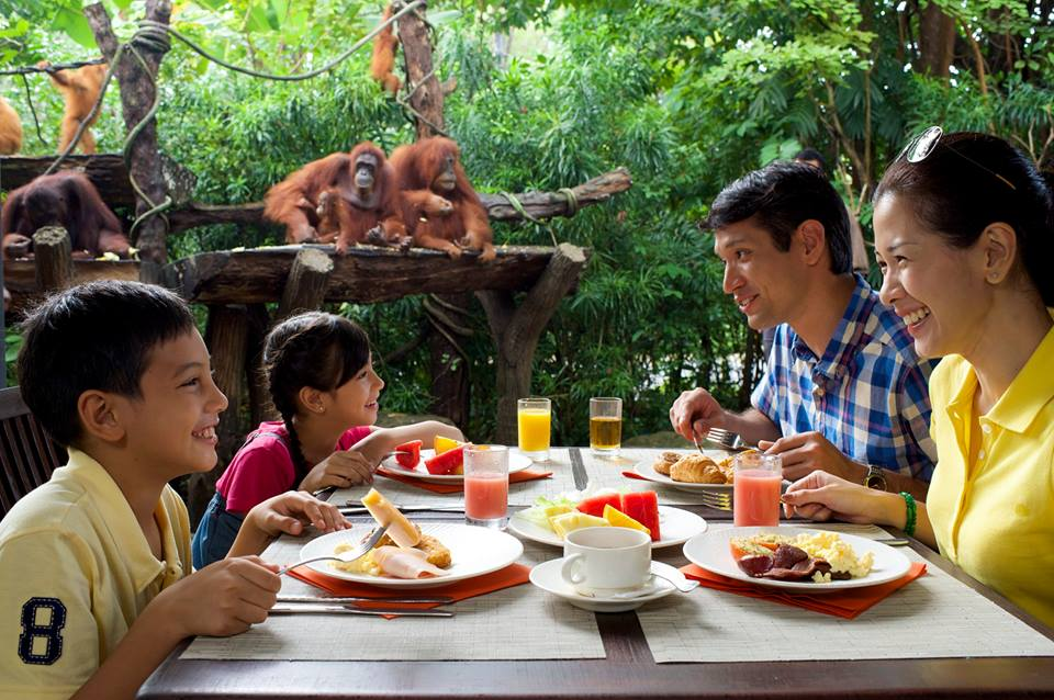 Breakfast with Orangutans in Singapore