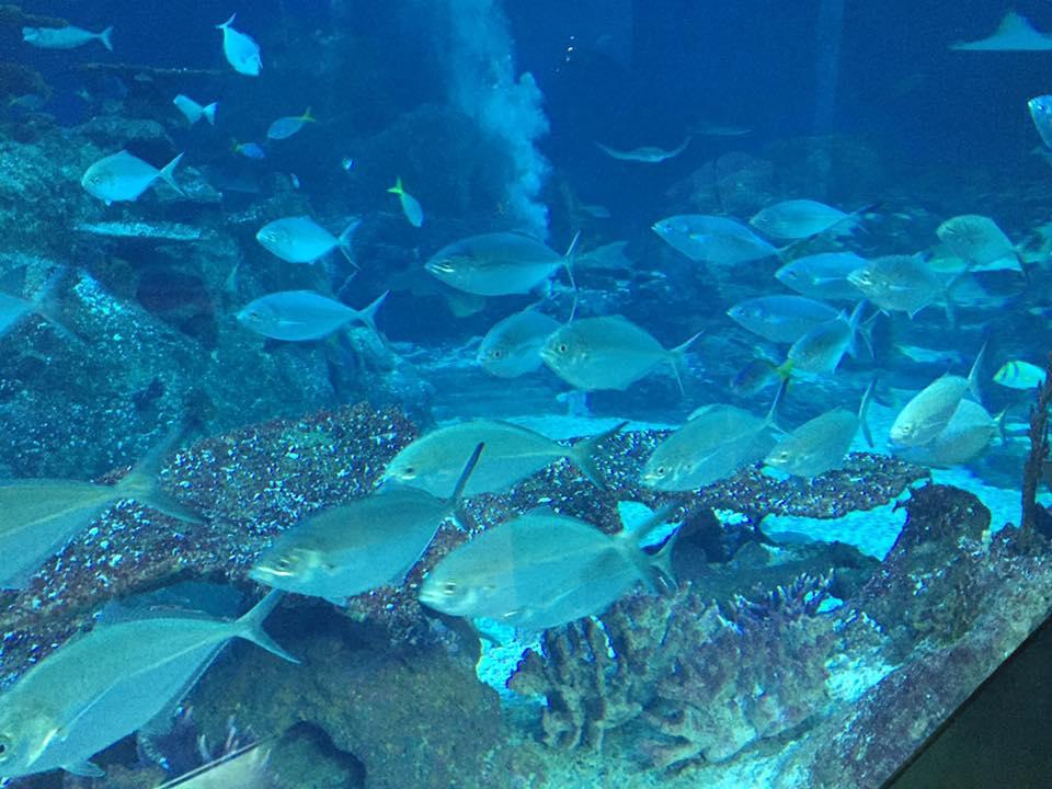 Visit an Aquarium in Singapore