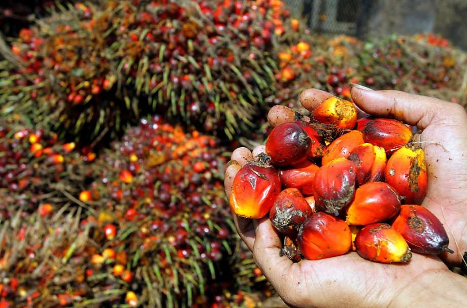mondelez palm oil greenpeace