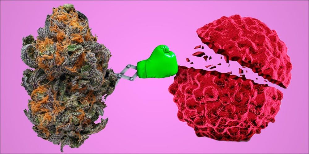 Stops the development of Cancer.jpg
