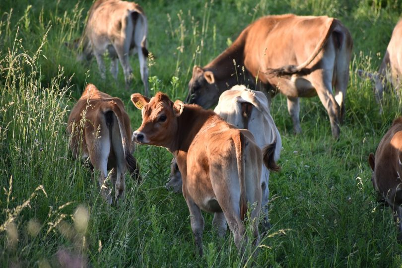 How to take care of your livestock: six easy steps