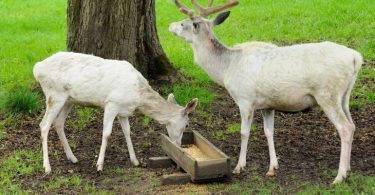 Buying Guide: Features To Consider When Hunting For A Deer Feeder