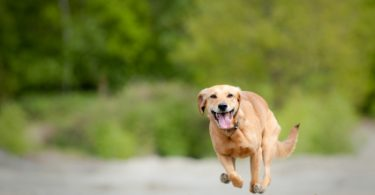 How to Keep Your Dogs from Going Astray