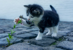 Here are 7 things you need to know before getting a cat