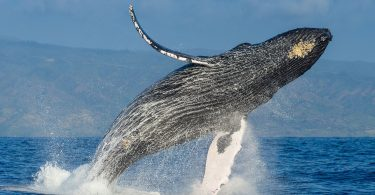 Make Your Maui Days Memorable, Experience Whale Watching In A Private Charter