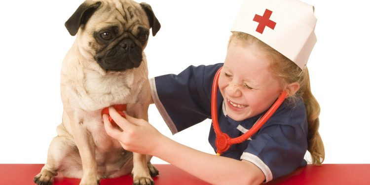 How To Give First Aid For Dogs